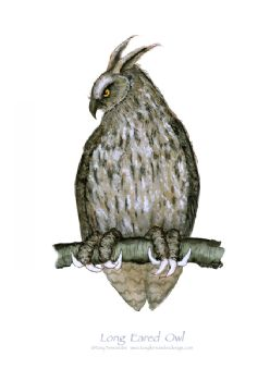Long Eared Owl - signed print
